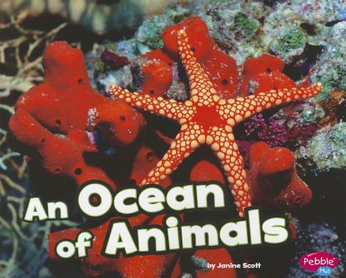An Ocean of Animals By Scott, Janine